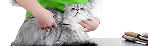 Cat Grooming | Claws and Paws - Tampa, FL