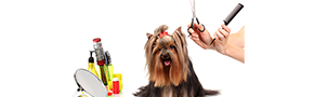 Mobile Pet Grooming | Claws and Paws - Tampa, FL,FL